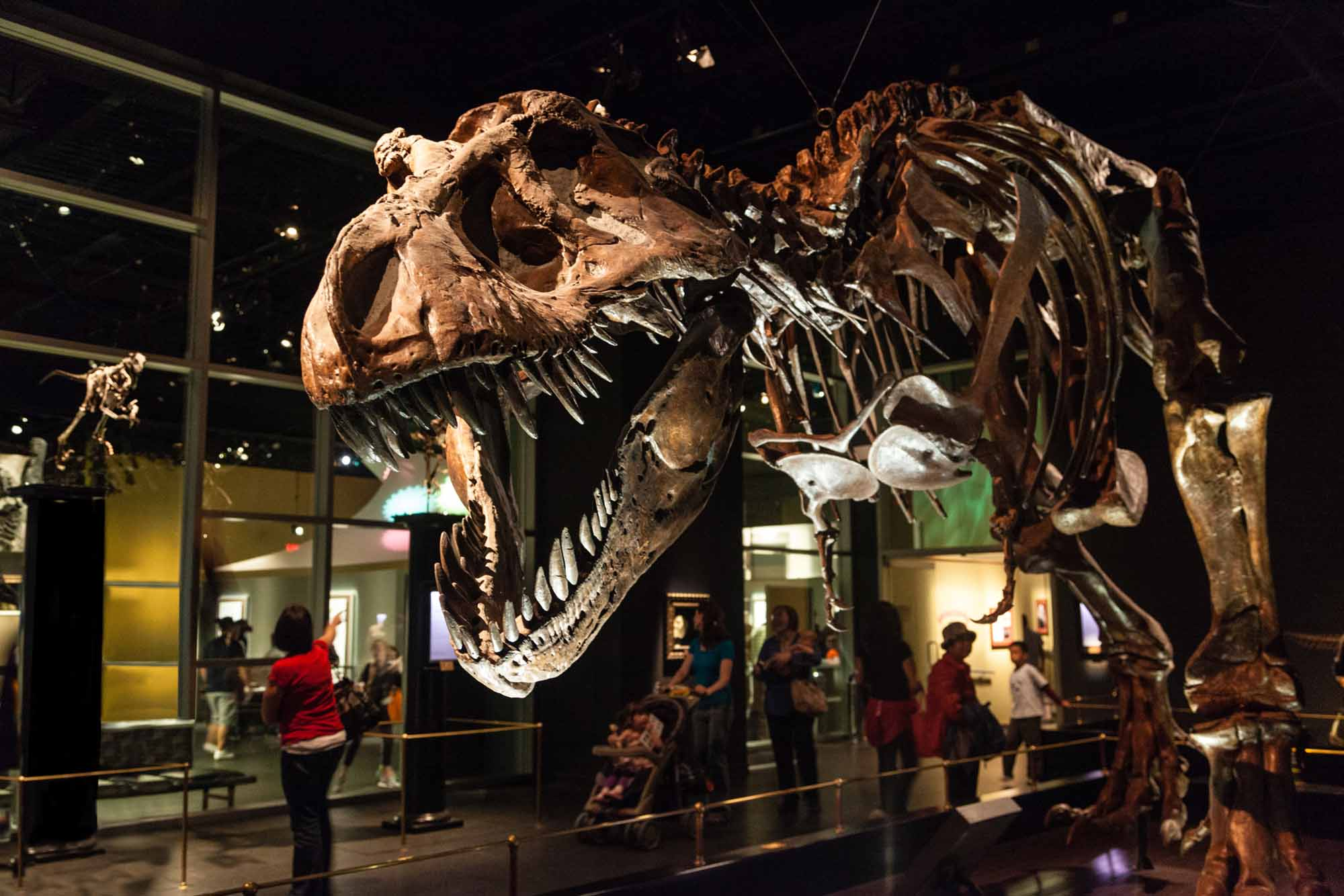 Image result for royal tyrrell museum of palaeontology