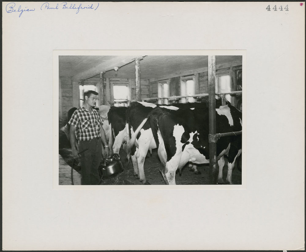 Paul Bellefroid milking cows on his farm in Pike River, Missiquoi County, Quebec