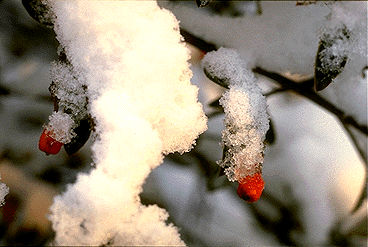 Snow, Close-up