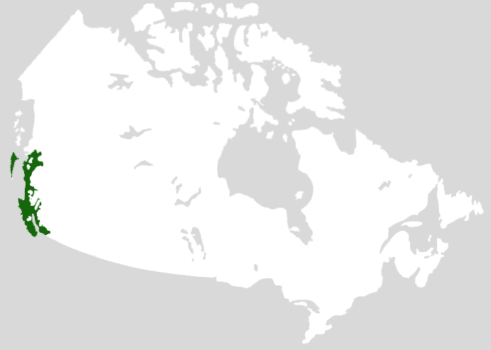 Forest Regions The Canadian Encyclopedia