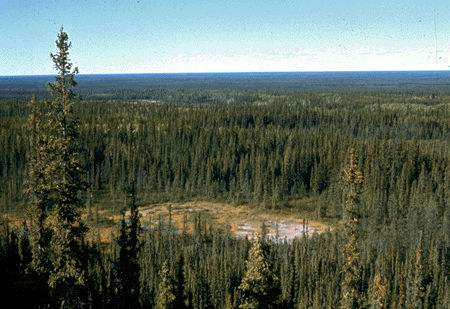Boreal Forest and Bog