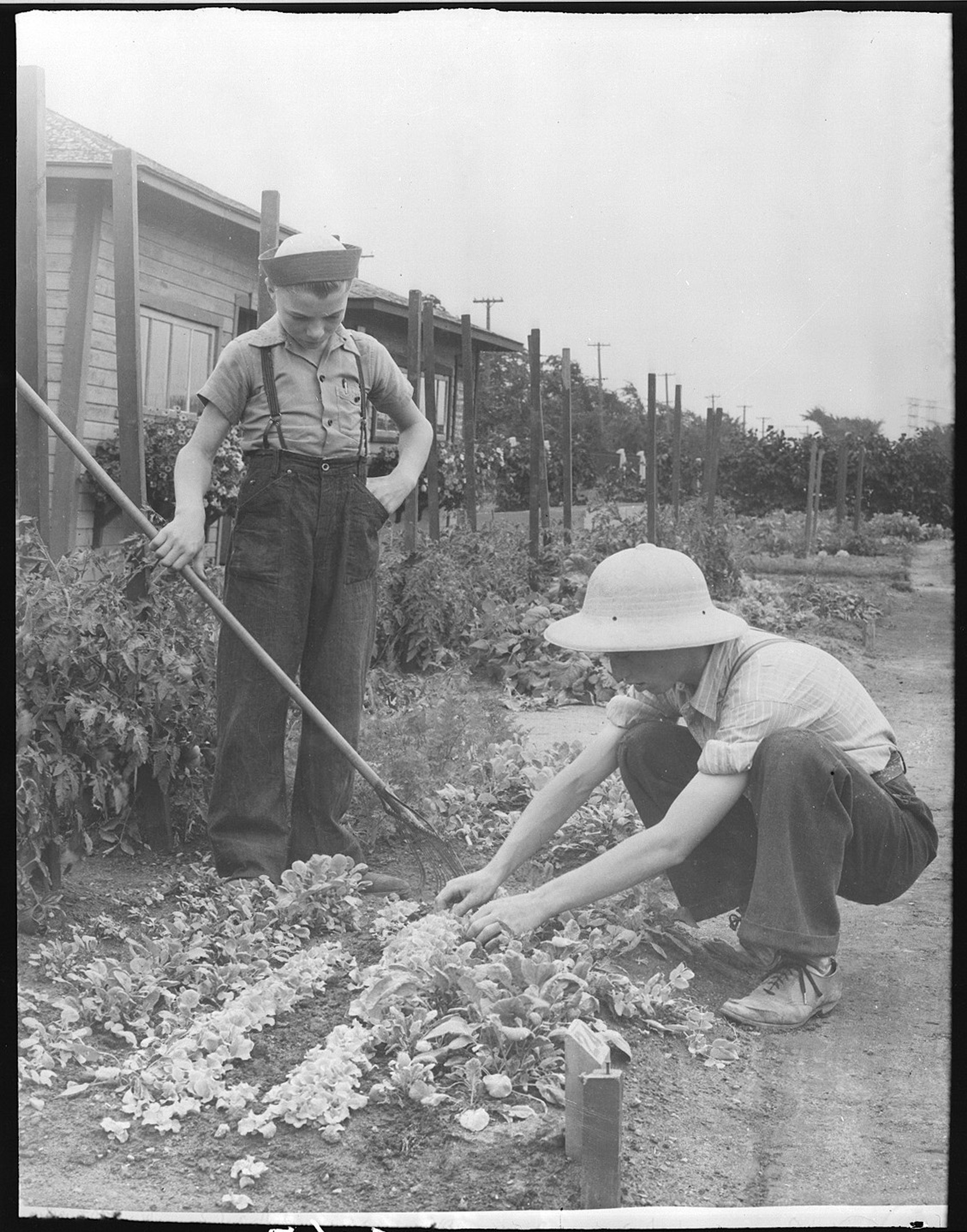 Children in the Victory Garden - Montréal