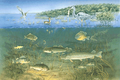 salt marsh ecosystem essay What roles do the plants and animals you listed above play in the salt marsh ecosystem 5 what is detritus and its role in the estuarine ecosystem salt marsh ecology the belle w baruch foundation salt marsh ecology vocabulary list adaptation.