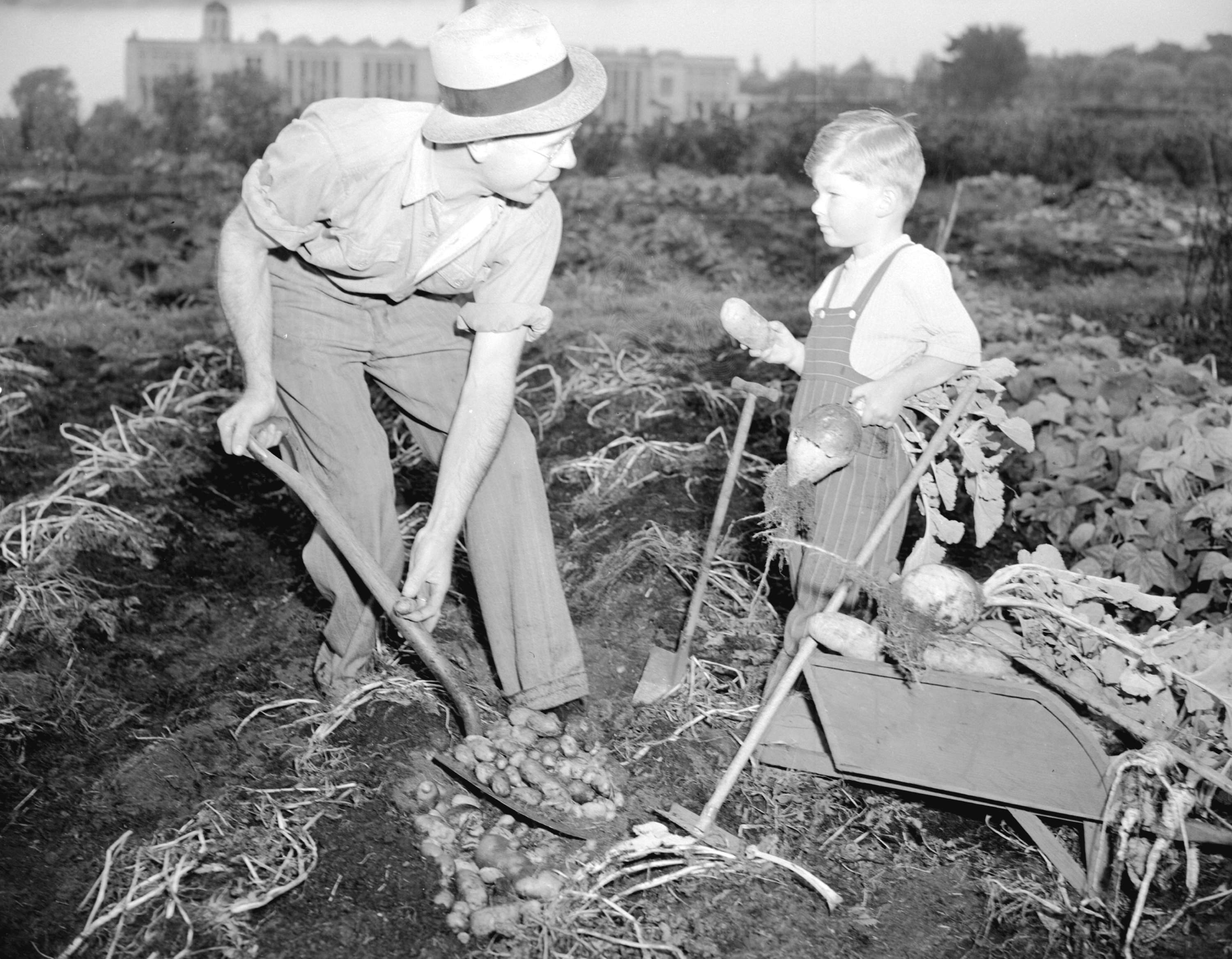 Victory gardens the canadian encyclopedia for What was the goal of victory gardens