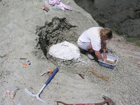 Excavation of a Fossil Nest