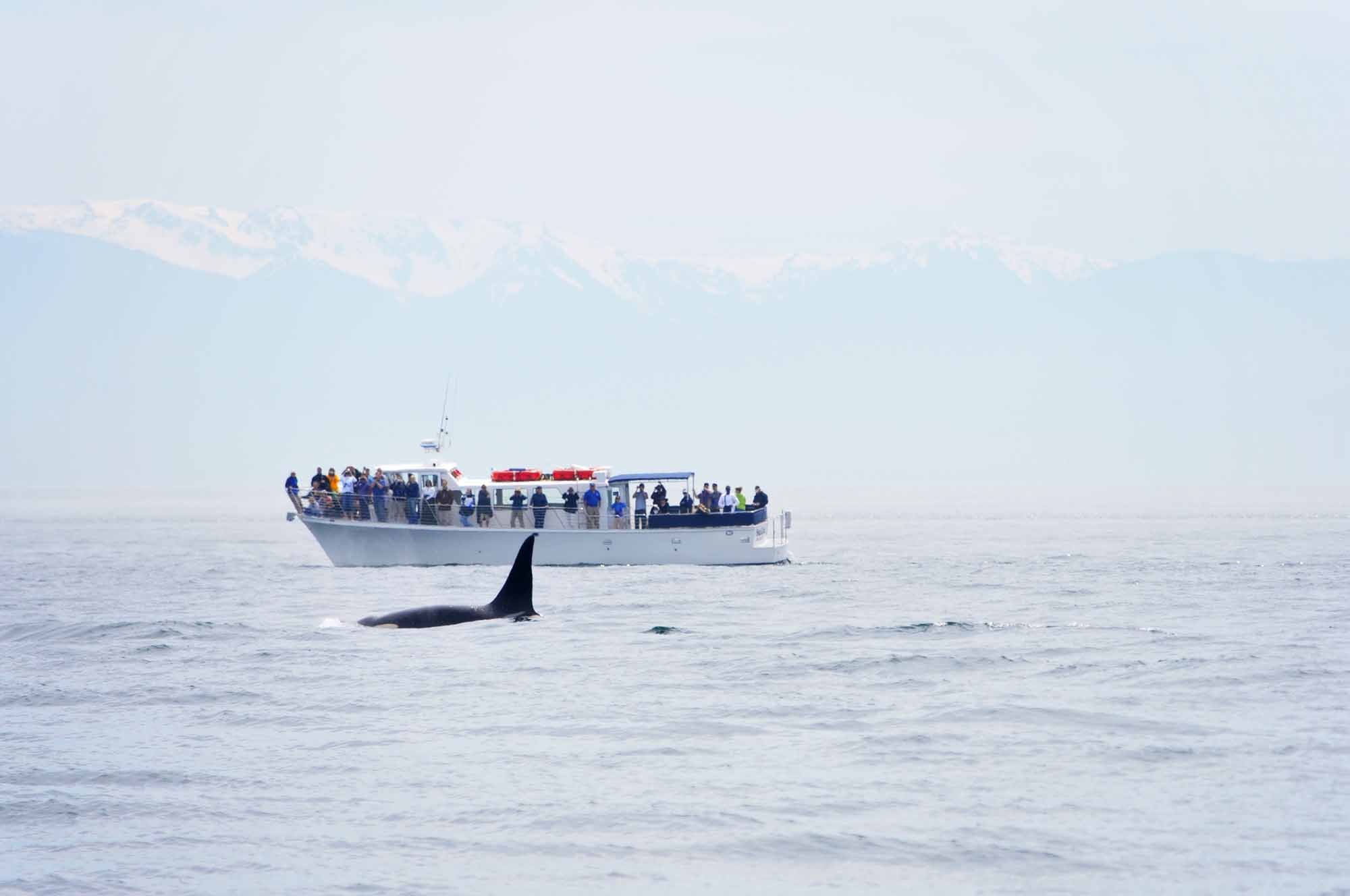 British Columbia Whale Watching