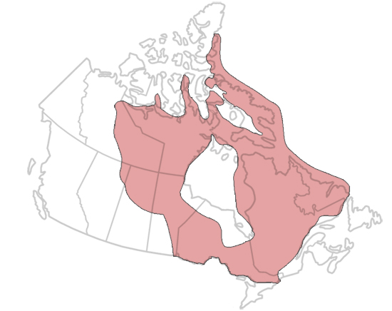 Canadian Shield Geological Region