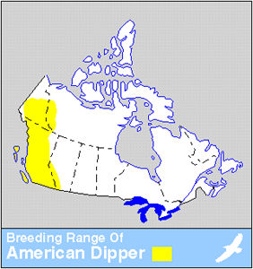 Dipper Distribution