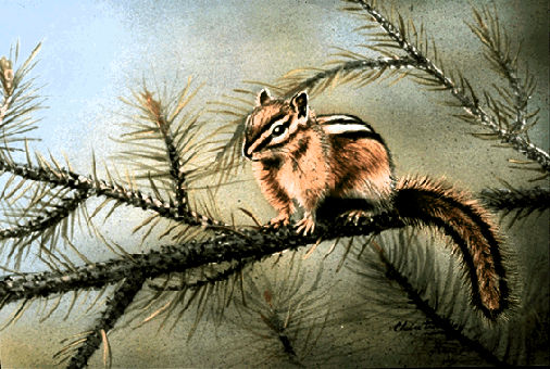 Chipmunk, Eastern