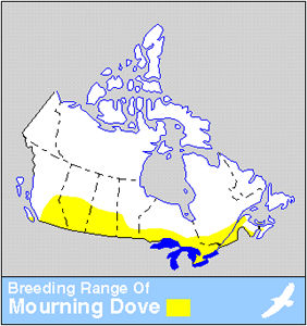 Mourning Dove Distribution