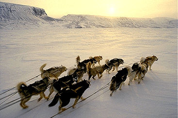 Dog Team on Devon Island