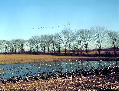 Migratory Bird Sanctuary