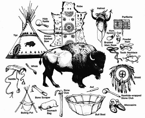Uses of the Bison or Buffalo