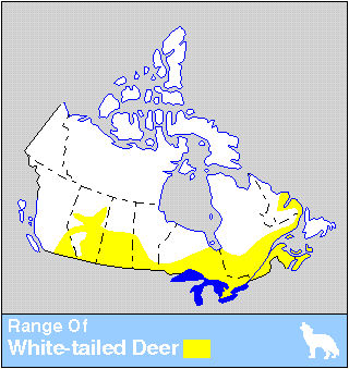 White-tailed Deer Distribution