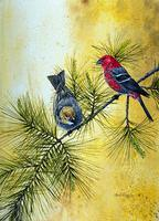 Grosbeak, Pine