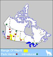 Wapiti Distribution