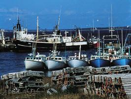 Lobster Fishing Boats, Mahone Bay