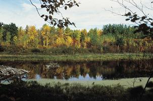 Elk Island, parc national