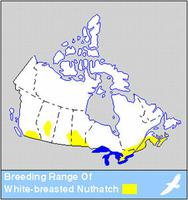 White-breasted Nuthatch Distribution