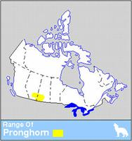 Pronghorn Distribution