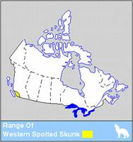 Western Spotted Skunk Distribution