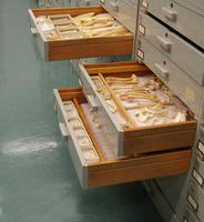 Zooarchaeological Collection