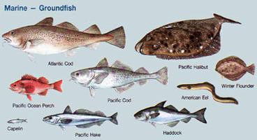 Fish, Groundfish