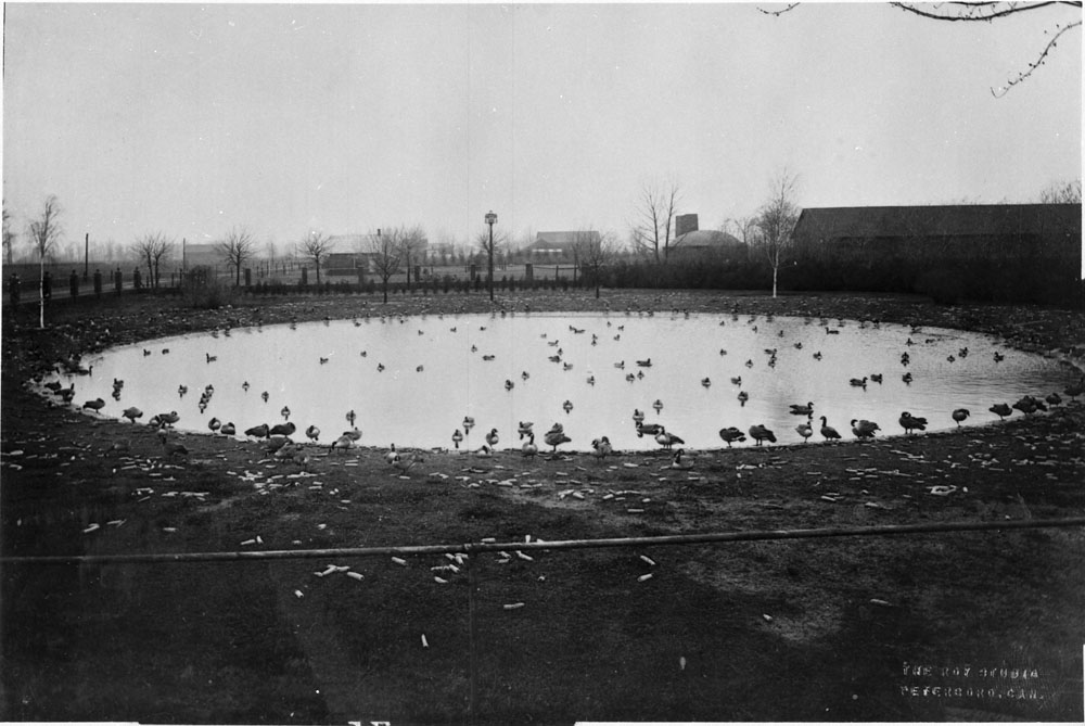 Jack Miner's Backyard Pond